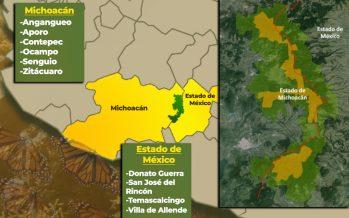 Conoce el Programa permanente para abatir la tala Ilegal en la Reserva de la Biosfera Mariposa Monarca