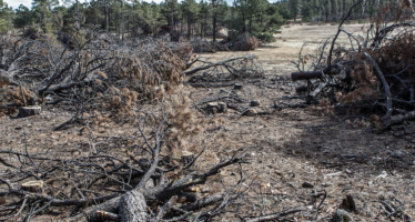 México: desdén presupuestal, deforestación y defensores asesinados