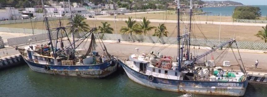 Buscan la sostenibilidad de la pesquería de camarón en México, América Latina y el caribe