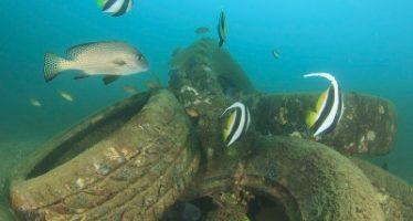Buscan estudiantes mexicanos para realizar proyectos a favor del rescate de los océanos