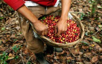 Flora útil de los cafetales en la Sierra Norte de Puebla, México