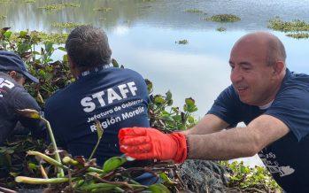 Retiran lirio de la presa Cointzio, un acuífero importante que abastece 45 colonias de Morelia