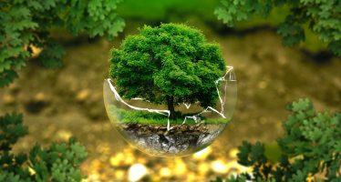 Preguntas del medio ambiente para empezar a responder en 2020
