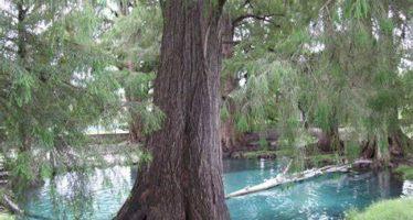 Gobierno de Pacheco Pulido autorizó construcción de Lagoons Country Club en Tepeojuma