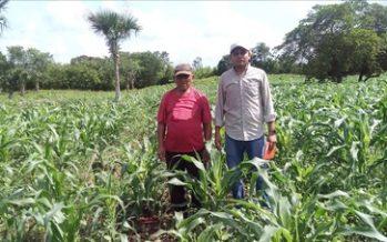Maíz nativo es clave para erradicar el hambre y mejorar la nutrición en el país