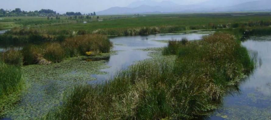 INIRENA: Urgente la protección y conservación del humedal sur de Pátzcuaro, pues produce una cuarta parte de toda el agua en la zona