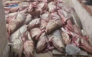 Pesca de totoaba en el Mar de Cortés