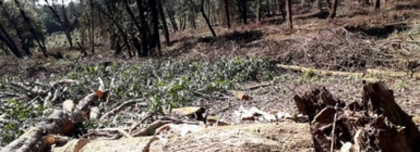 Sin detener a los verdaderos responsables, Profepa envía a la FGR a siete taladores por daño a Reserva de la Mariposa Monarca