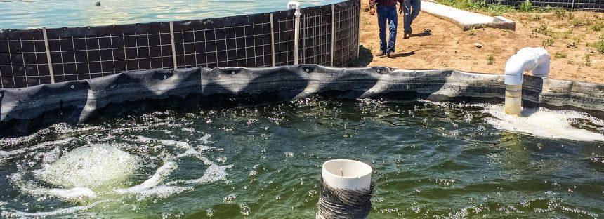 Acuerda gobierno de la 4T, impulsar proyectos acuícolas en las zonas áridas y semiáridas de México