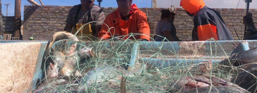 Amplia Estados Unidos, embargo pesquero del Alto Golfo de California por fracaso en protección de la vaquita marina
