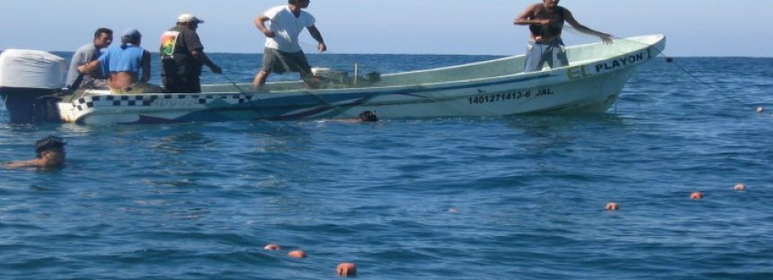 Investigan recursos pesqueros de Guerrero, Oaxaca y Chiapas para protección, conservación y aprovechamiento