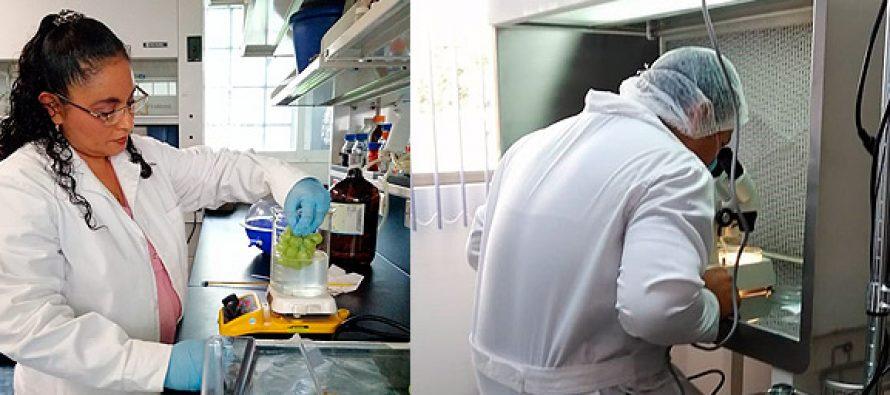 Científicos y científicas del Colegio de Posgraduados de Córdoba, desarrollan cubiertas biodegradables para hortofrutícolas