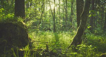 ¿Por qué se conmemora el Día de la Tierra?