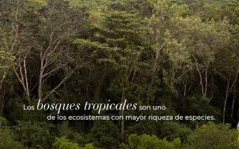 El Sector Forestal Mexicano en Cifras 2019