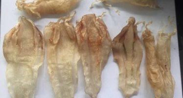 Aseguran 66 buches de totoaba en Mazatlán, Sinaloa, que iban a exportarse a China