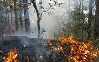 Cazadores furtivos habrían ocasionado incendios forestales en Quintana Roo