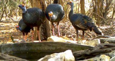 Fauna se beneficia con bebederos artificiales en la Reserva de la Biosfera Ría Lagartos, en Yucatán
