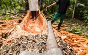 Arqueólogos mexicanos rescatan y documentan la construcción manual de canoas lacandonas en Metzabok, Chiapas