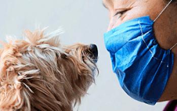 No hay evidencia científica que respaldo transmisión de coronavirus SARS CoV-2 por animales: Jorge Castañeda de la UAM