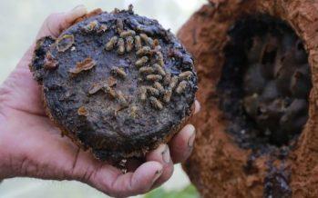La abeja: el ser vivo más importante del planeta