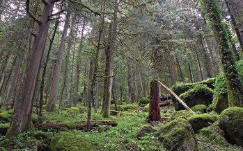 En sector ambiental mexicano, hay avances en la administración de agua y gestión forestal