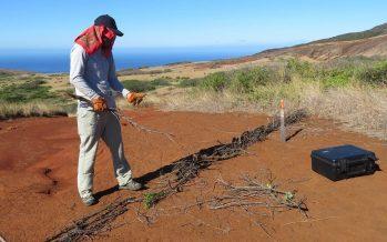 Gobierno mexicano controla erosión en isla Socorro, provocada por ganado introducido, y el cambio climático