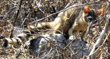 Liberan 15 organismos de vida silvestre rescatados en zonas urbanas de Morelos