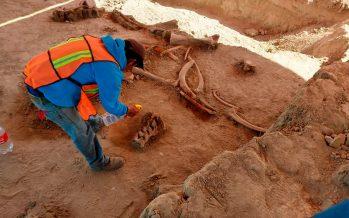 Hallazgo de osamentas de 60 mamuts y 15 enterramientos humanos en Aeropuerto Felipe Ángeles, registran 30 mil años de prehistoria