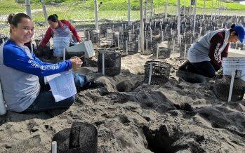 Mujeres cuidan tortugas en El Verde Camacho, Mazatlán