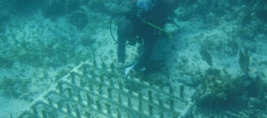 Avanza conservación de arrecifes de coral del Parque Nacional Costa Occidental de Isla Mujeres, Punta Cancún y Punta Nizuc