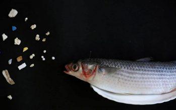 Residuos de Covid-19, riesgo de contaminación de los océanos del mundo