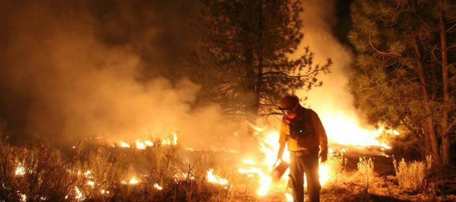 Reporte de incendios activos en México: 12 incendios forestales activos en 7 estados del país