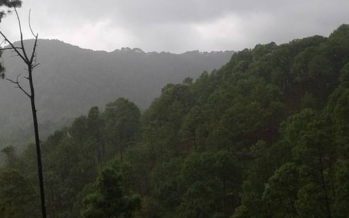 Barranca del Calabozo: el presente incierto de la silvicultura comunitaria en el occidente de México
