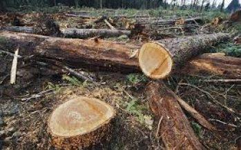 La crisis por la pandemia de Covid-19, obliga a un necesario replanteamiento del sector forestal mundial