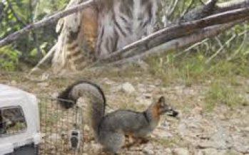Abierta convocatoria para Programa de Subsidios para la Conservación y Aprovechamiento Sostenible de la Vida Silvestre Nativa