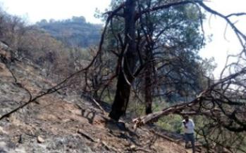 Denuncia penal por afectación forestal en incendio provocado en Santo Domingo Ocotitlán, Morelos