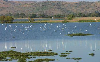 Las aves en México, tienen una gran importancia ecológica y social. ¡Hay que protegerlas y conservarlas!