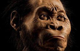 Tres especies de homínidos convivieron en Sudáfrica hace dos millones de años