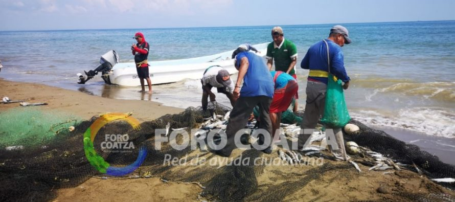 Pescadores de Coatzacoalcos, Veracruz, capturan incidentalmente dos delfines; fueron liberados sin daños