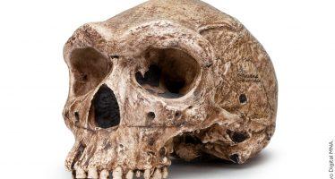 Homo antecessor: Pieza del mes de julio en el Museo Nacional de Antropología e Historia