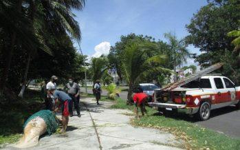 Atención al varamiento y muerte de un manatí (Trichechus manatus) en Chetumal, Quintana Roo