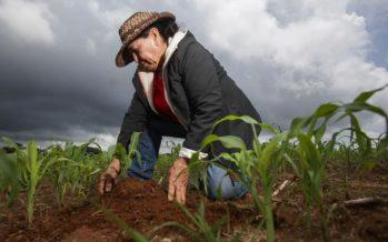 Va México por un ambiente sano y desarrollo sustentable del campo
