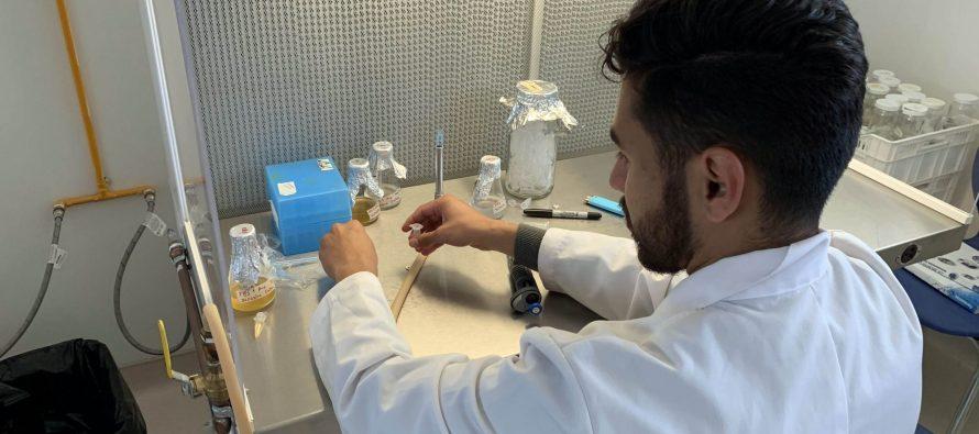 Estudian en la UNAM en el PlanTECC, eficiencia fotosintética para elevar productividad en el agro mexicano