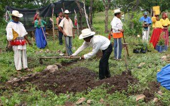 Introducción a las salvaguardas del proyecto de Bosques y Cambio Climático de la CONAFOR