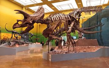 Ceratópsidos de México: Yehuecauceratops, Coahuilaceratops y Agujaceratops