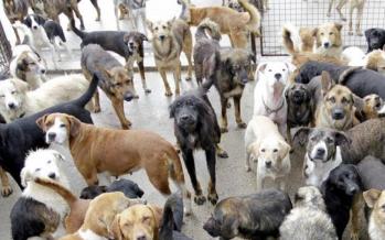 Día del Perro, y ebrio que mata a pitbull