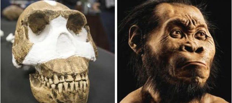 Homo naledi, una nueva especie de descubierta en Sudáfrica, sorprende a los antropólogos