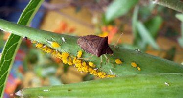 La encrucijada de los insectos en el Antropoceno