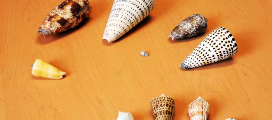 Científicos de la UNAM estudian venenos de caracoles cónicos y túrridos para tratamiento de alzheimer y parkinson