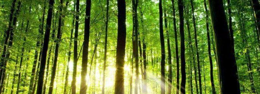 Una visión a la importancia económica y ecológica de los ecosistemas forestales